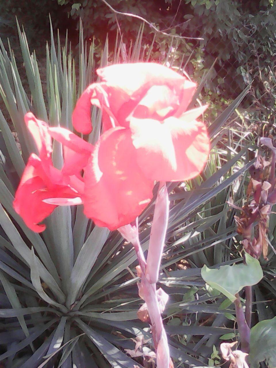 Цветы в адлере фото